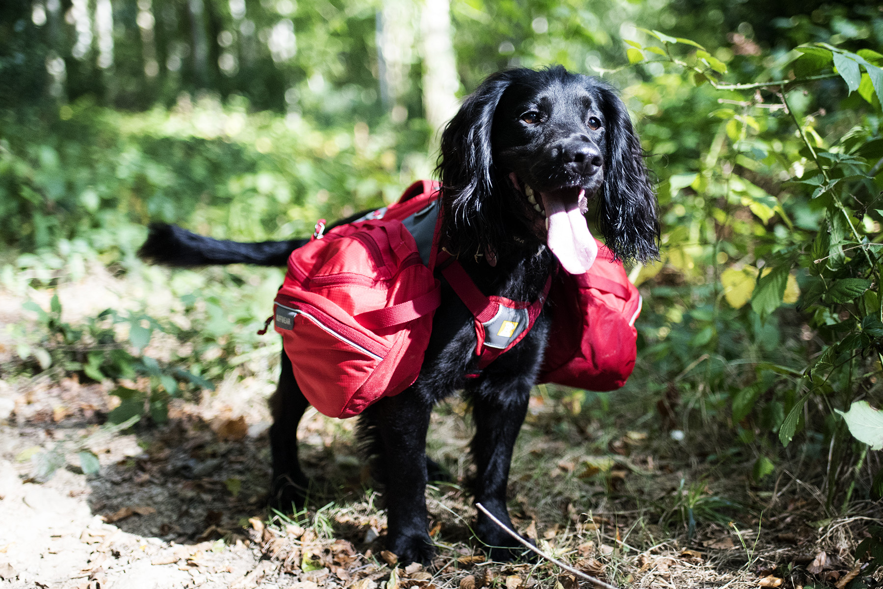 The Dogs Have Backpacks of Their Own | The Cornish Dog