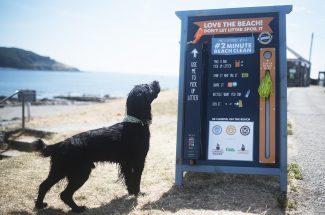 Hannafore Beach   The Cornish Dog
