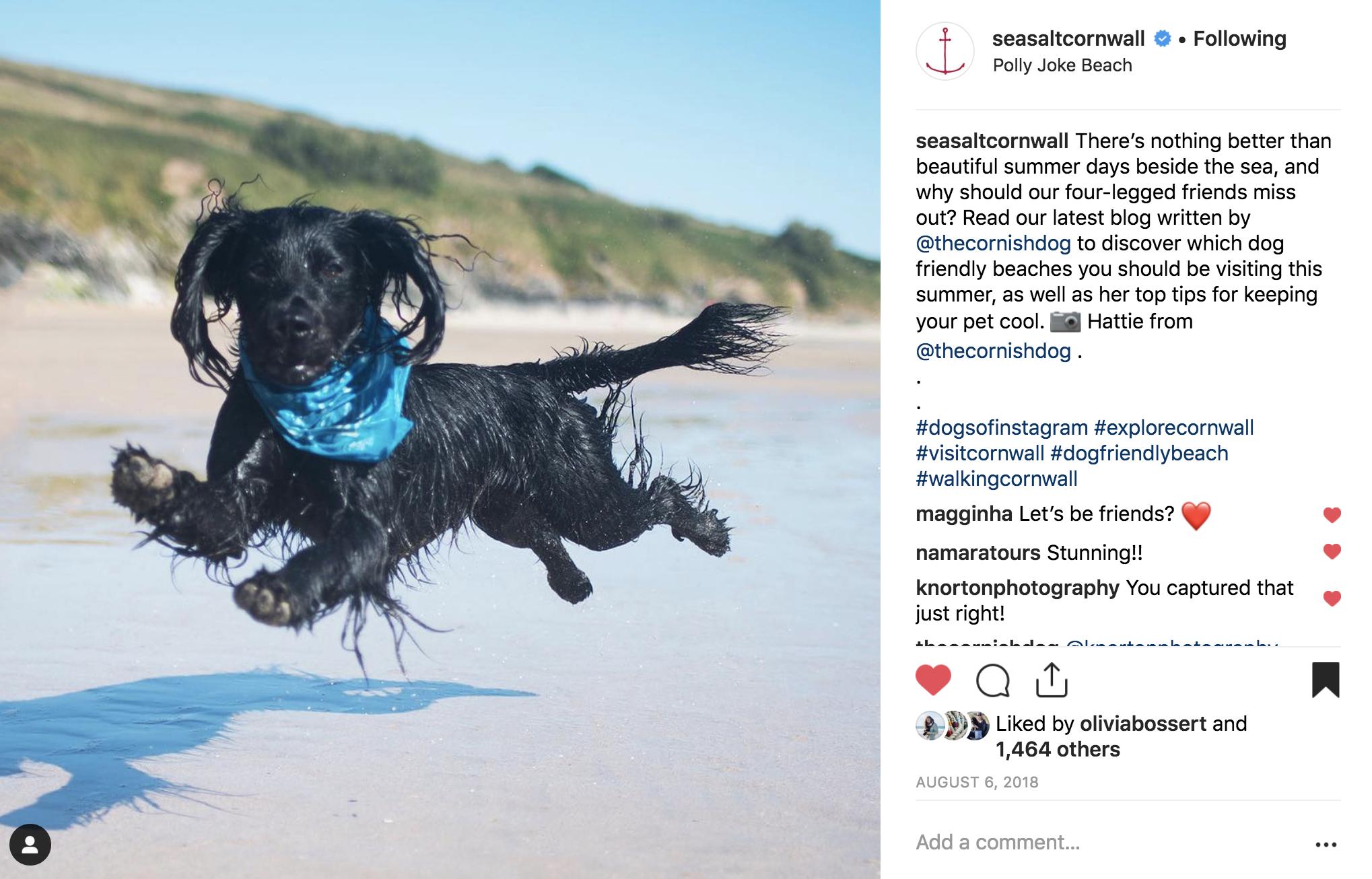 Seasalt | The Cornish Dog