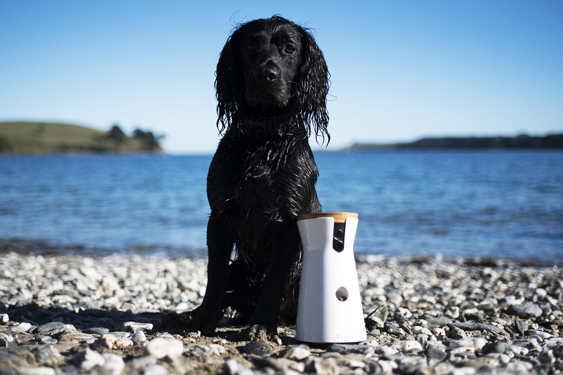 Furbo Dog Camera | The Cornish Dog | AD