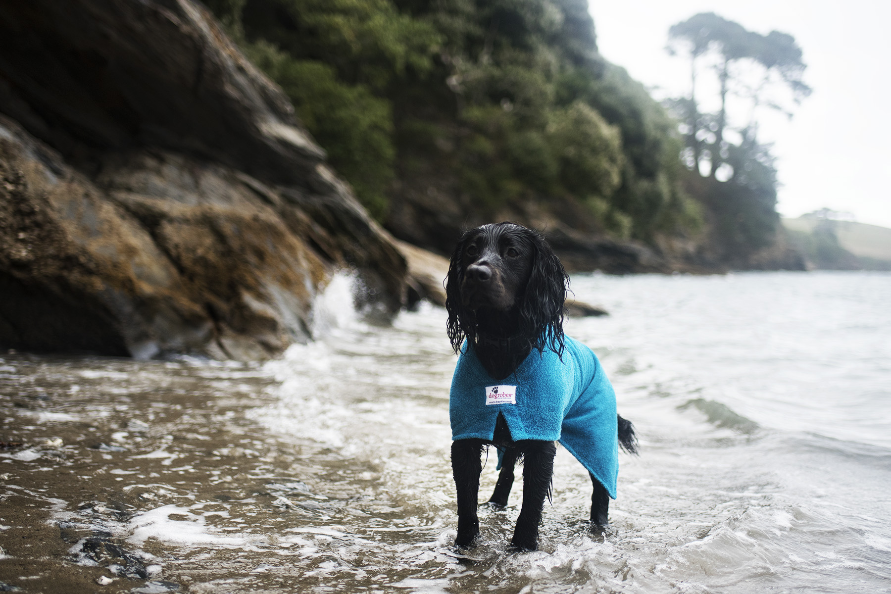 Dogrobes | Drying Coat for Your Dog | The Cornish Dog