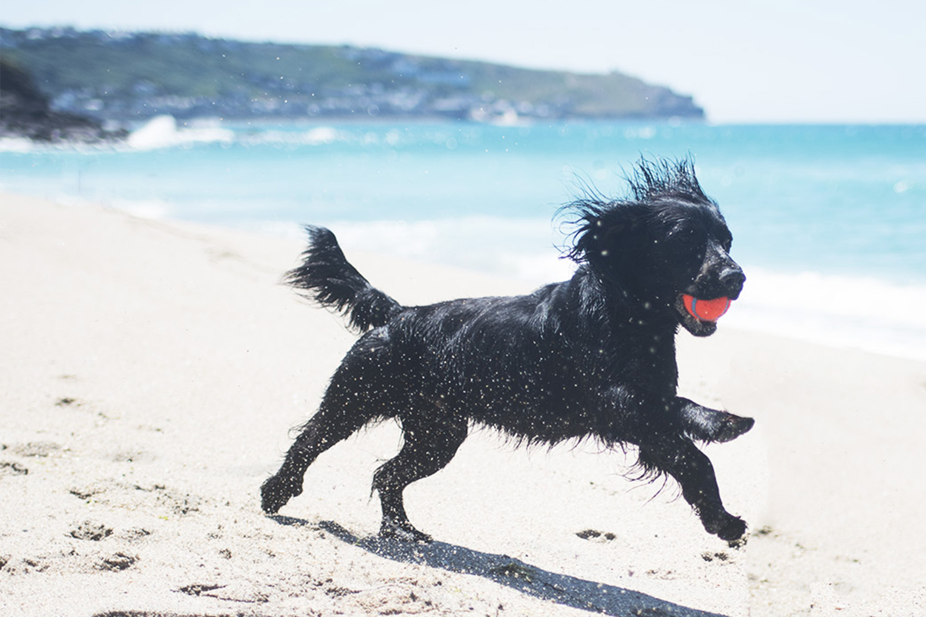 How to Shop for Secondhand Dog Items | The Cornish Dog