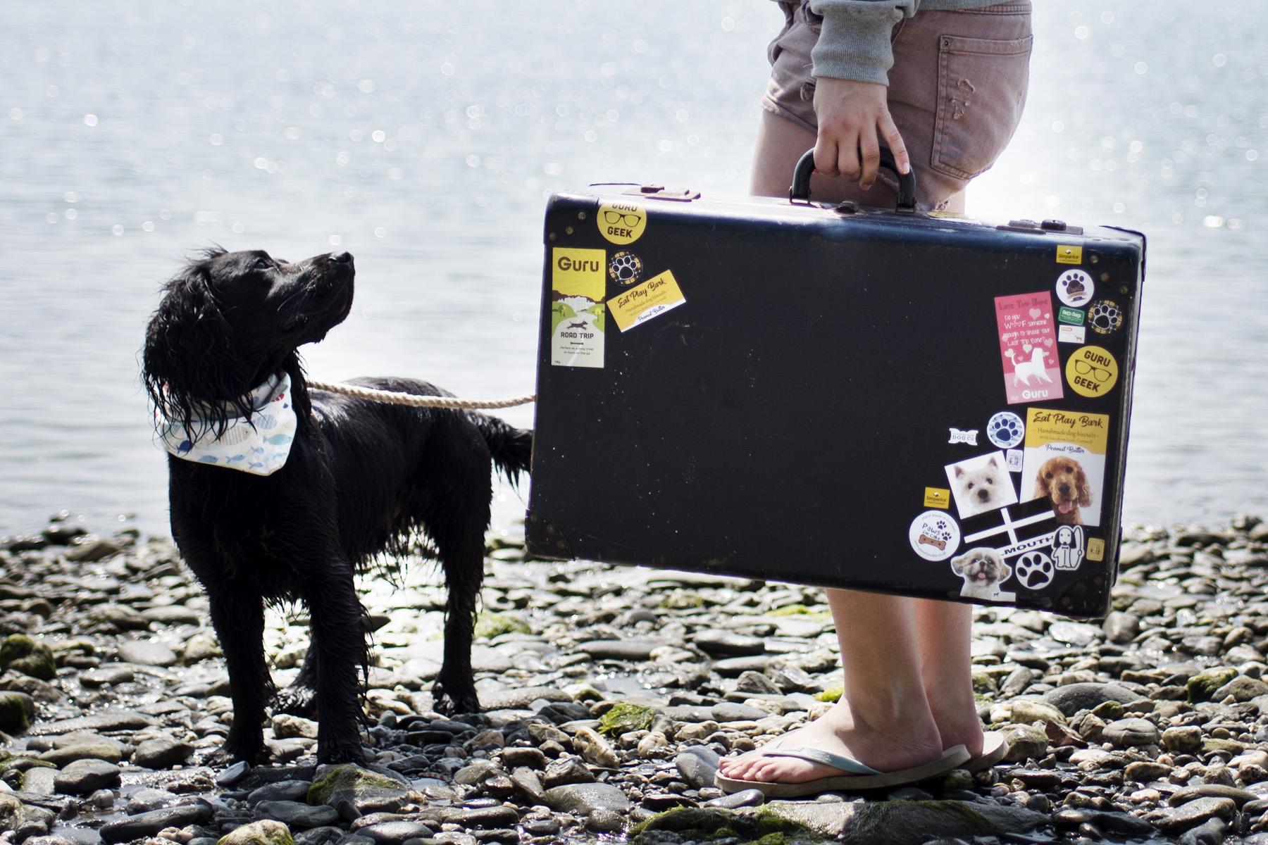 Dog Friendly Retreats | The Cornish Dog