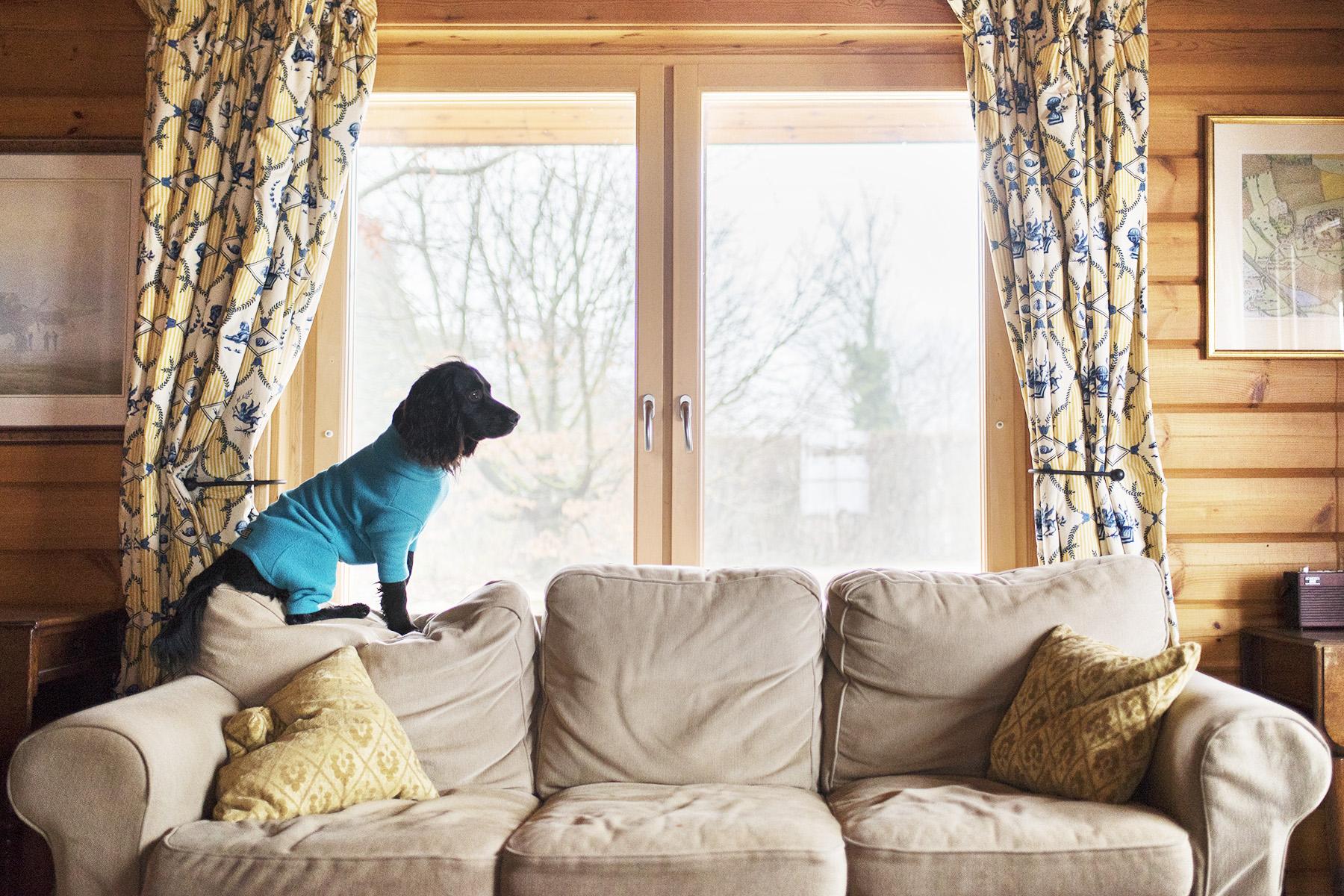 Log House Holidays | The Cornish Dog
