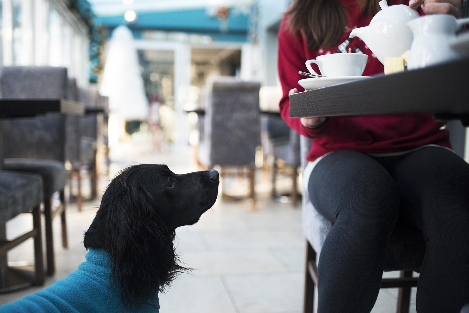 Talland Bay Hotel | The Cornish Dog