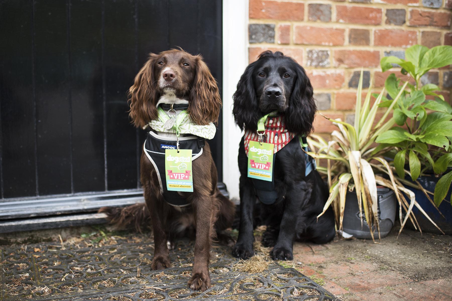 Dogstival | The Cornish Dog