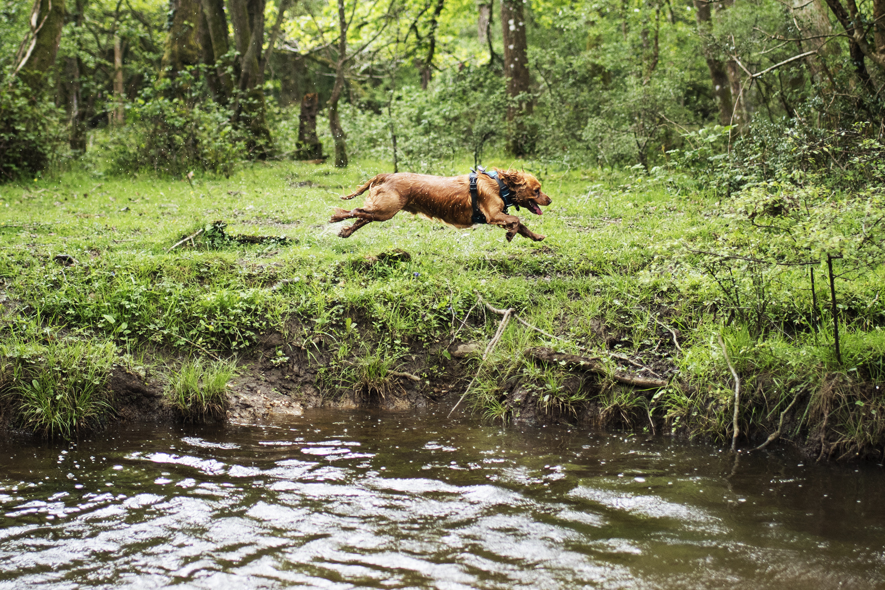 A Dog Friendly Weekend in the New Forest   The Cornish Dog