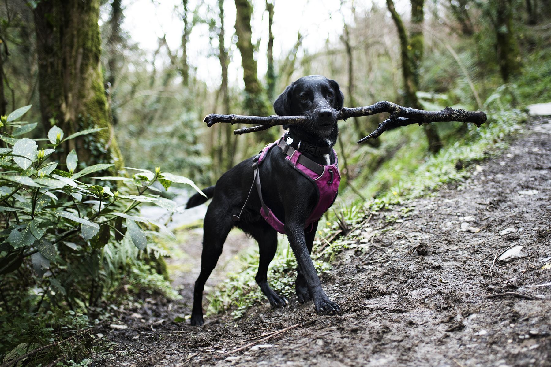 Ruffwear Front Range | The Cornish Dog