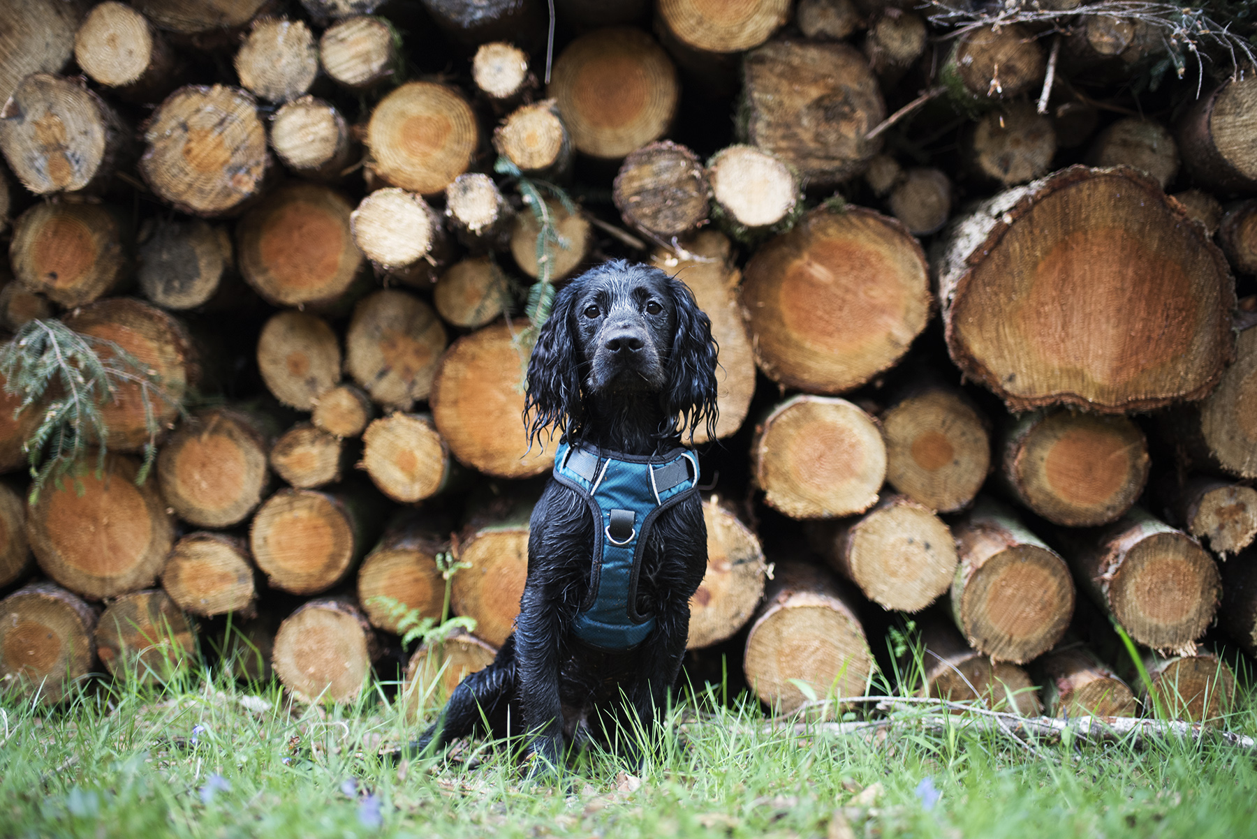 Embark Adventure Harness | The Cornish Dog