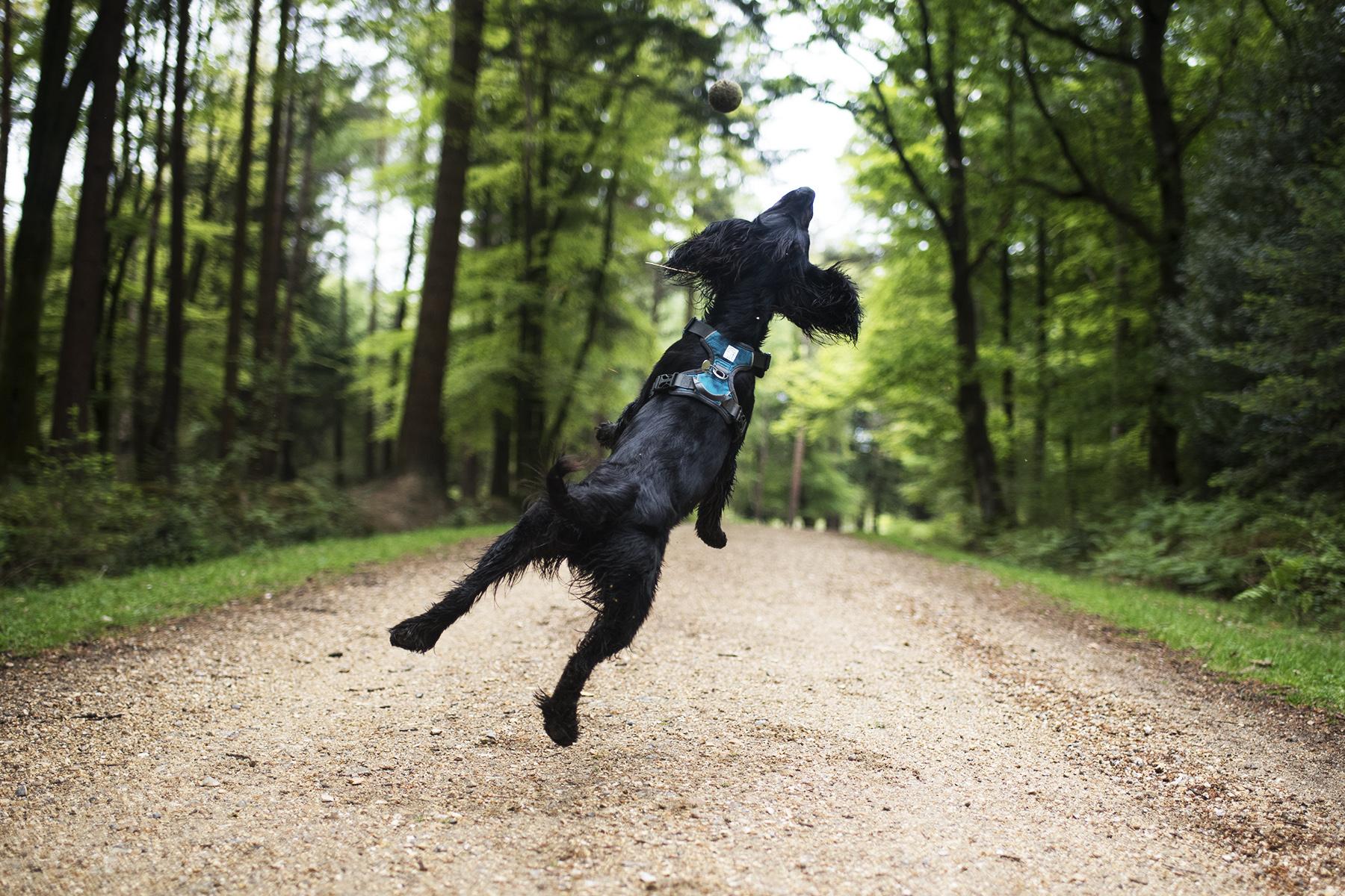 Embark Adventure | The Cornish Dog