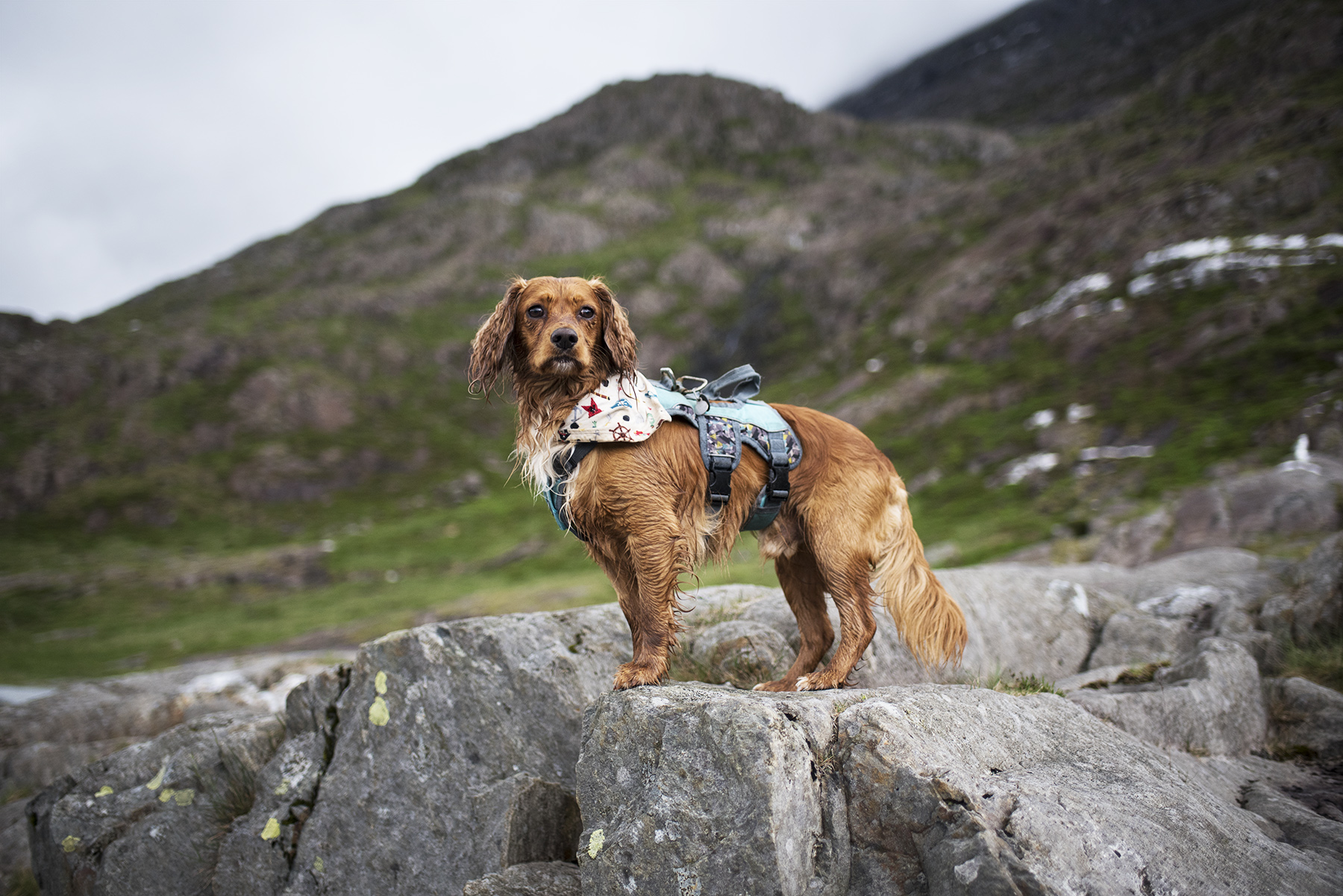Hen Shortly After Completing the Descent | The Cornish Dog