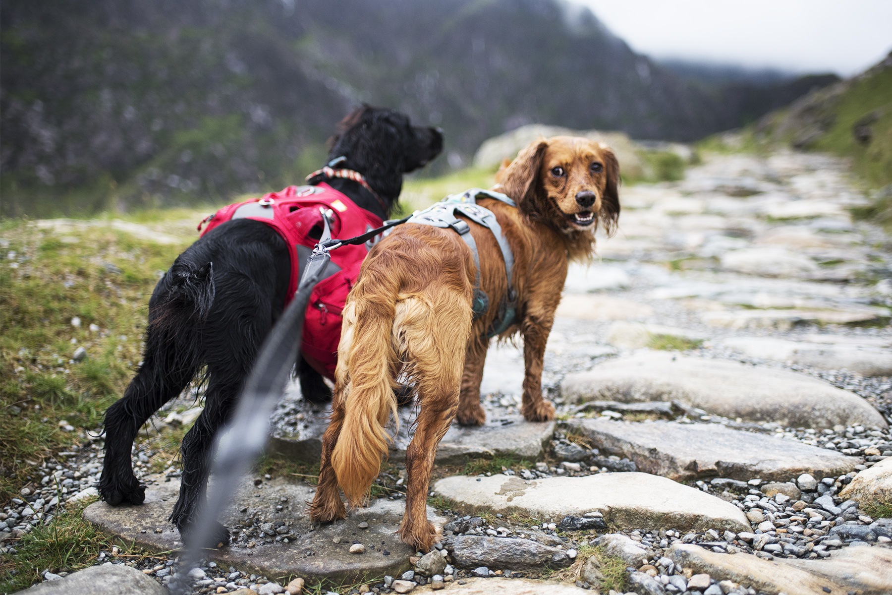 Ready to Climb Snowdon | The Cornish Dog