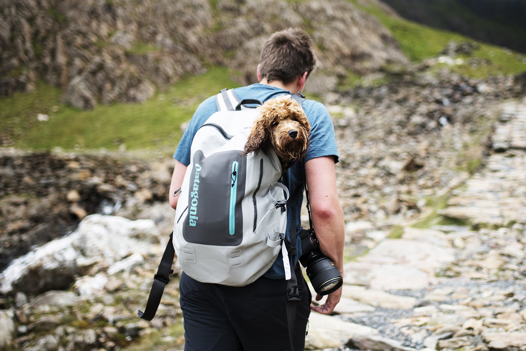 Mable Being Carried in Patagonia Bag | The Cornish Dog