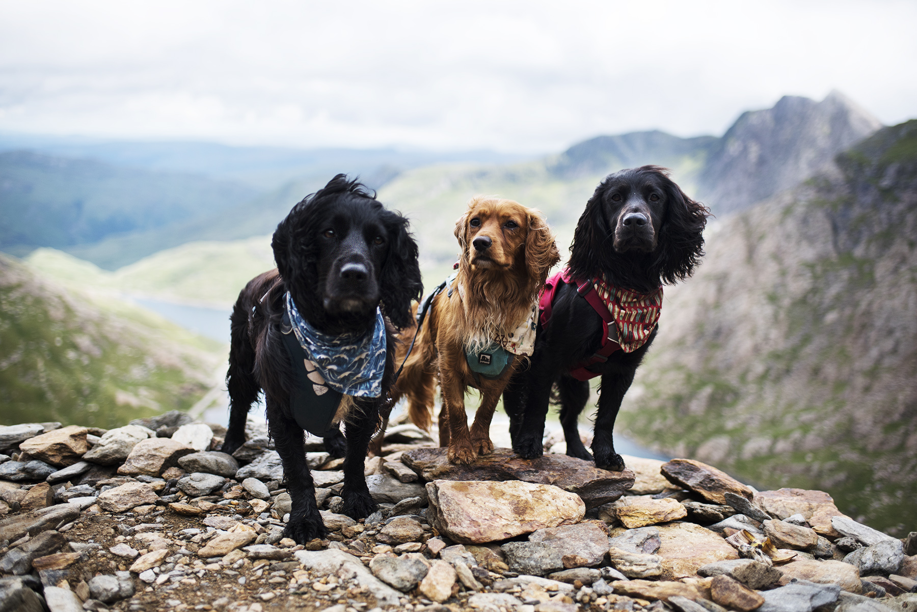 Climbing Snowdon with Dogs | The Cornish Dog