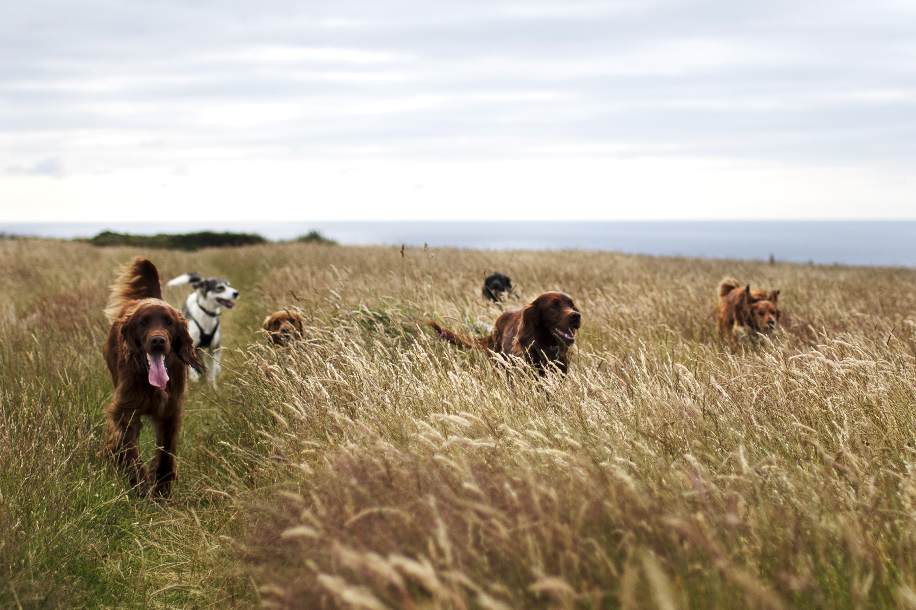 North Cornwall Dog Walking | The Cornish Dog