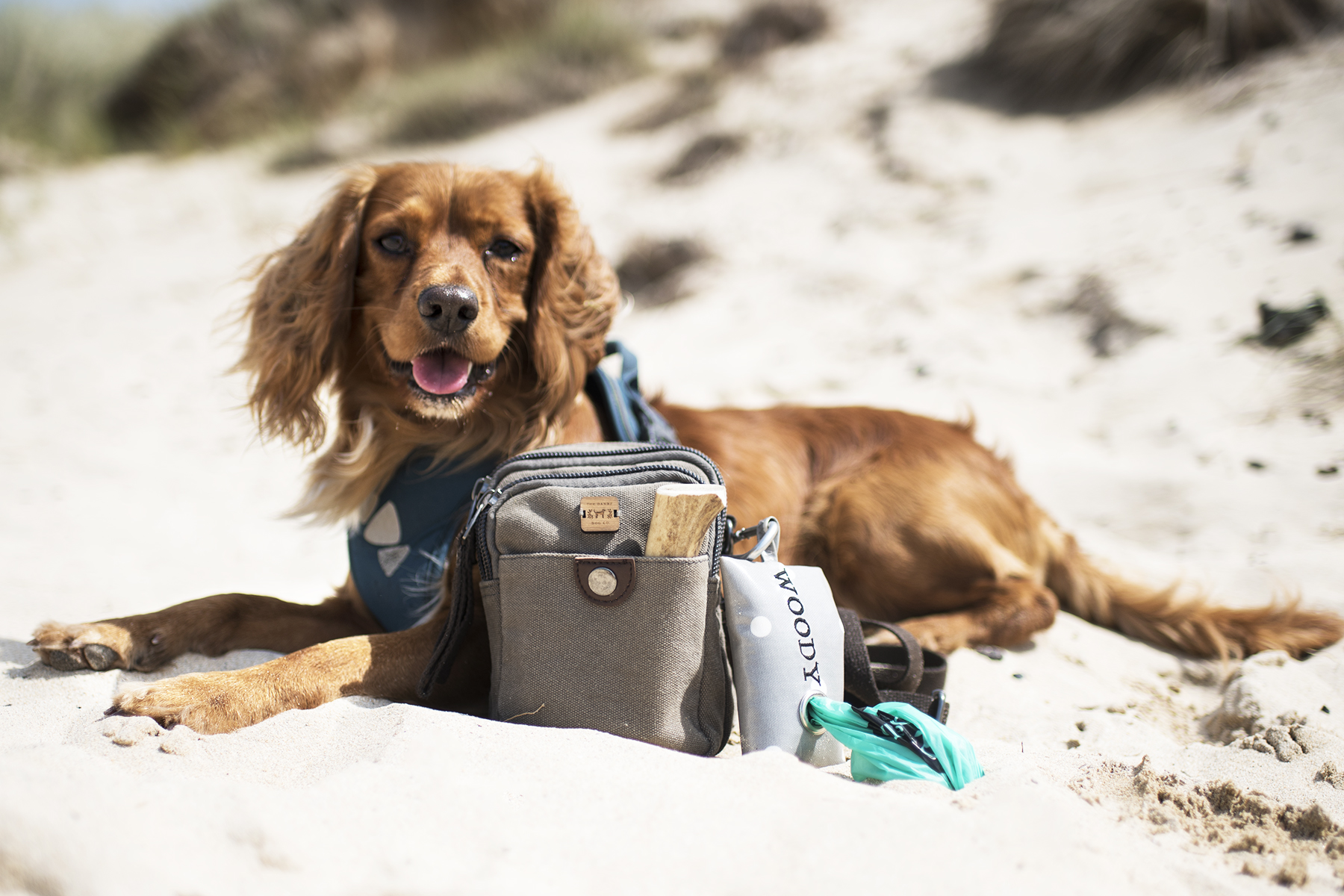 Hen with our Dog Walking Bag | The Cornish Dog