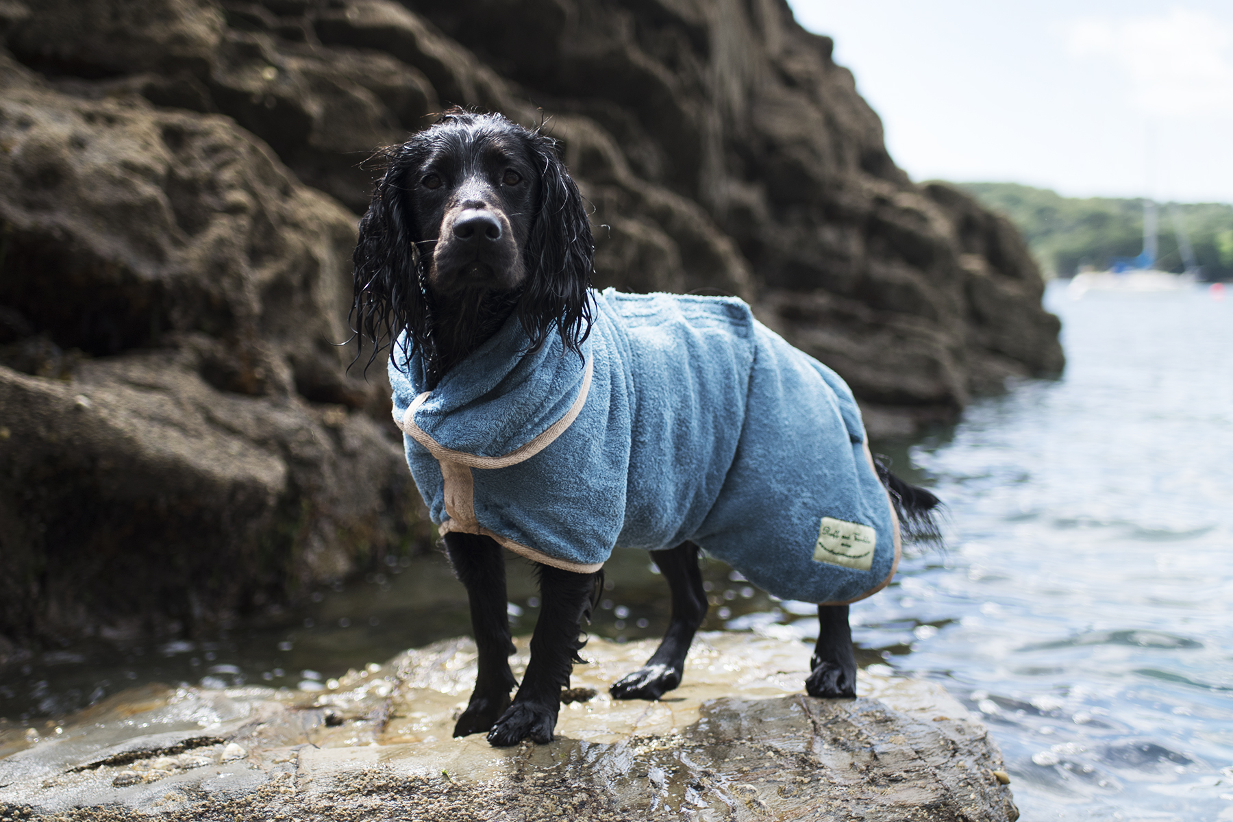 Ruff and Tumble Dog Coats   The Cornish Dog