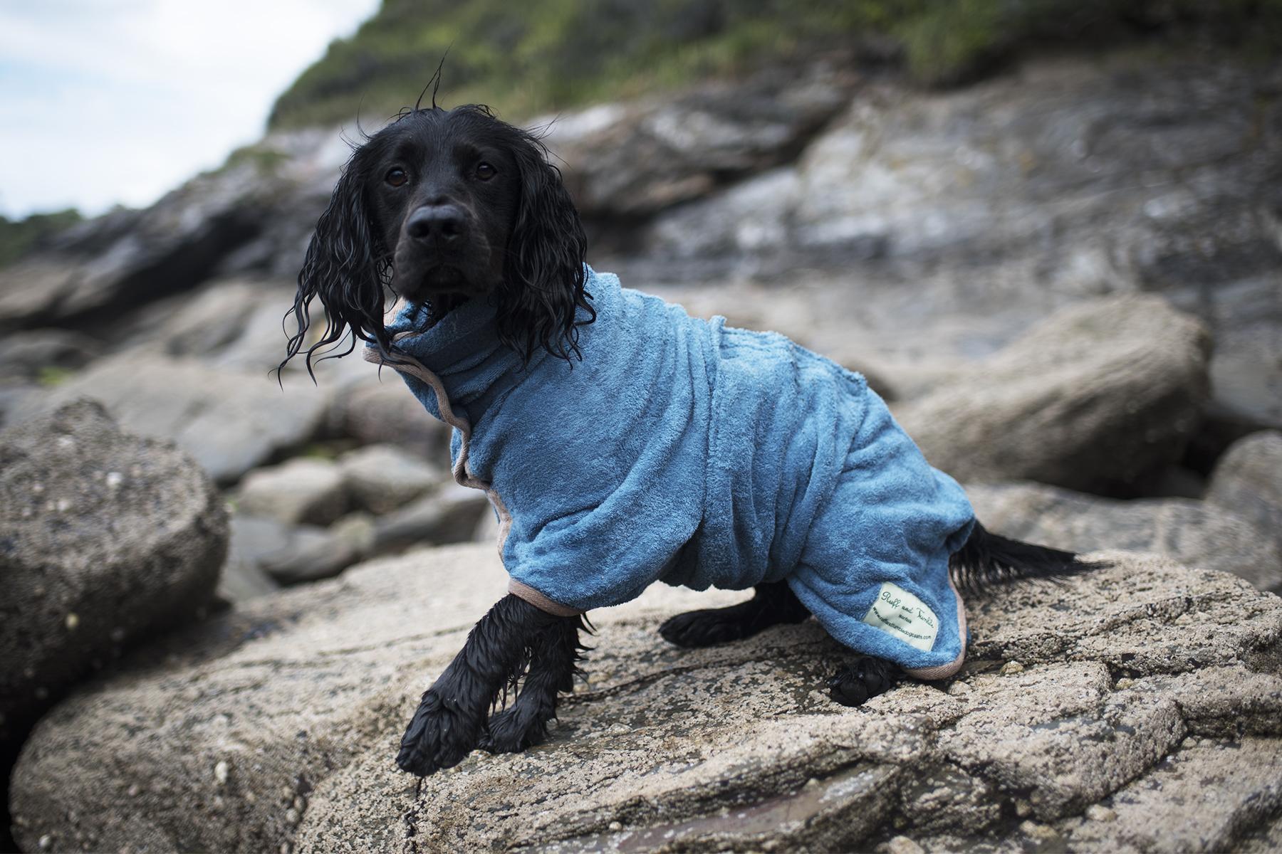 Foster Dog Essentials | The Cornish Dog