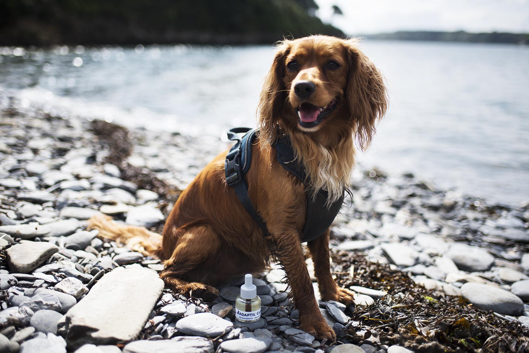 Foster Dog Essentials   The Cornish Dog