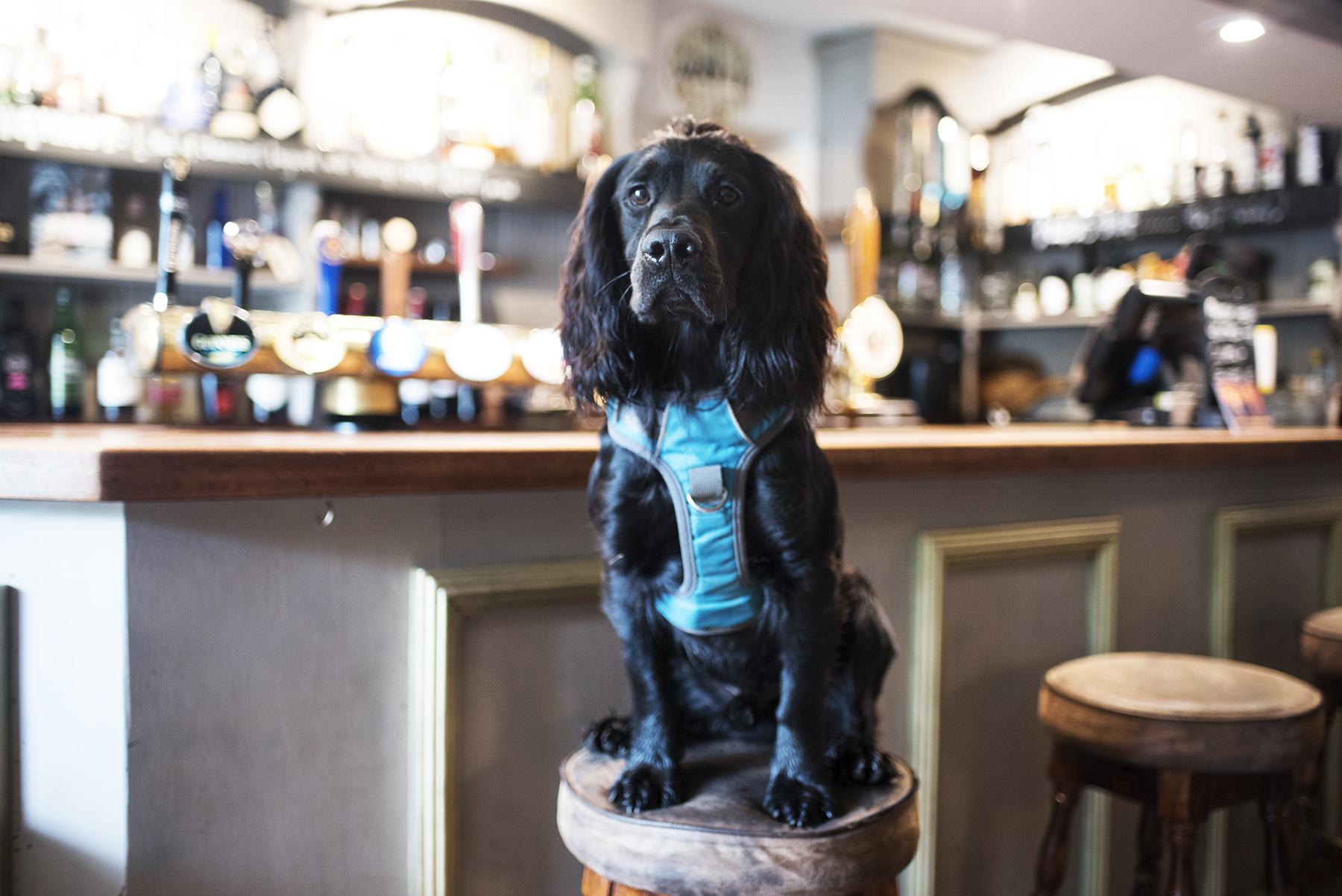 The Cornish Dog